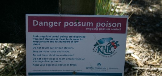 Opossum danger